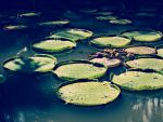The Pond by Lesbehonest