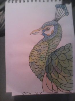 peacock by leannepixie