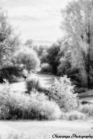 Pinhole IR Photography 3 by Okavanga