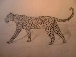 African Leopard by salain666