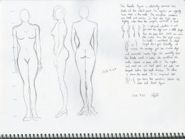Body structure practice 11 by sophiaan0