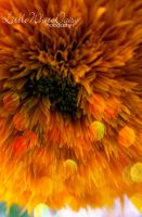 Last flickers of sunflower .2. by little-white-daisy