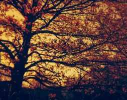 Lomography Redscale #1 by ncaph