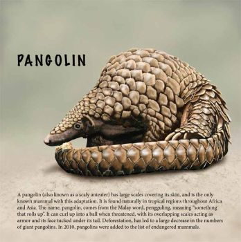 Pangolin by BlueCat-Amber