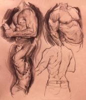 More muscle studies by Vetyr