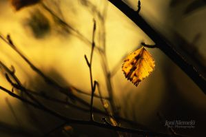 Last Leaf Of The Birch by JoniNiemela