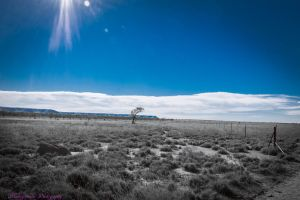 Fence line to no where....2 by midnightrider79