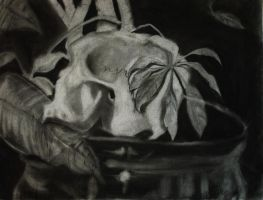 Skull Charcoal by ams719