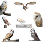 Owls-PNG by chaseandlinda