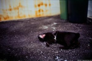 meow... 01 by Togusa208