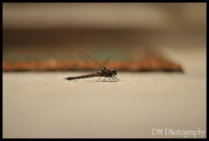 Porch Fly 2 by davidmoakes