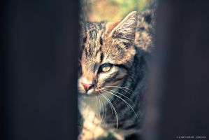 my  cat by rockmylife