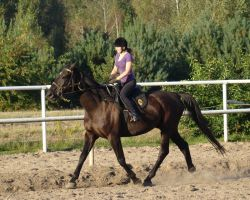 Stock 428: horse+rider trot by AlzirrSwanheartStock