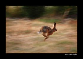 Sprint by grugster