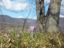 Crocus by Heres2Tomorrow