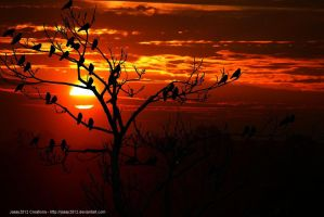 Birds Sunset by Jassy2012