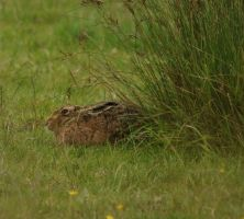 Hare Today by Xs9nake
