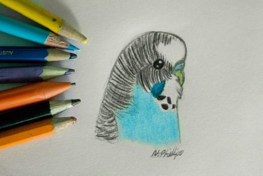 Little blue budgie by Nicknie121