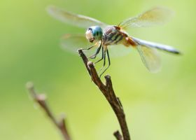 Dragonfly by Mjag