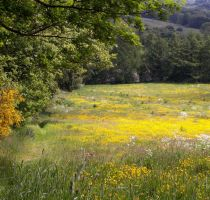 yellow Feild by Woofenbarken