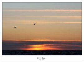 Fly Away by Mr808