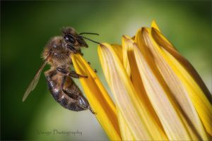 Marbella Bee by GJ-Vernon