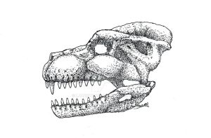 Skull of Gigantotherium odonis, Circa 1954 by LazerWhale