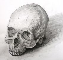 Another skull by thebonedrawer