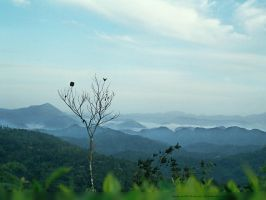 morning by sudhithxavier