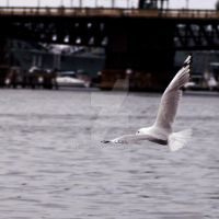 Seagull in Darling Harbour by Nendotan