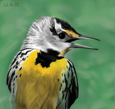 Meadow lark(mouse drawing) by White-Night-56
