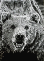 Grizzly Drawing by jmoneygetdown