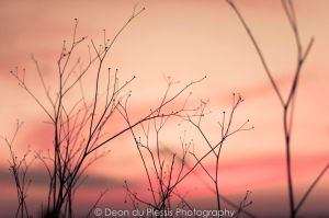 Pink Morning by Deond3