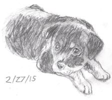 Puppy Sketch 2-27-15 by Collidoscope