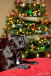 Christmas Card Puppy by AndrewJC