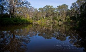Lane Cove Reflections by FireflyPhotosAust