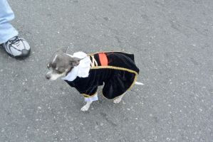 2014 Monster Bash, Colonial Dog Style by Miss-Tbones