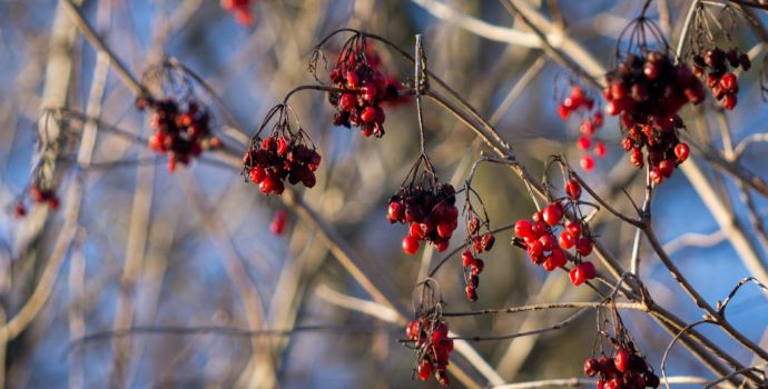 Winterfruits by VohuManah