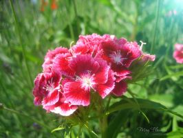 May Flowers 15 by love1008