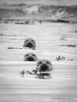 Three Amigos by sjbvrsn