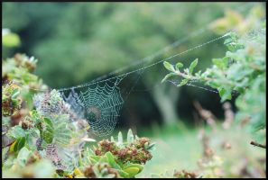 Spider's Web by PlasticusForkus