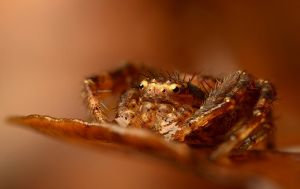 Winter Crab Spider by Alliec