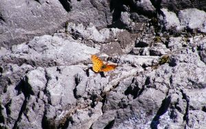 Butterfly in the mountains 2 by blogdrakeart