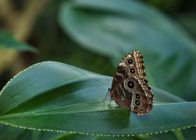 Butterfly Stock 05 by NellyGraceNG