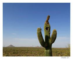 The Angry Saguaro by environment
