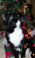 Holiday Kitty Why am I glowing by Melrainbow