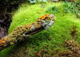 Miniature Log by smfoley
