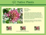 Native Plants of CSUCI Layout4 by vasha
