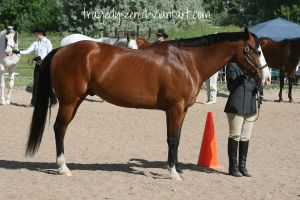 Quarter Horse Stock 45 by tragedyseen
