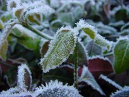 Frosty Leaf by MedeaMelana